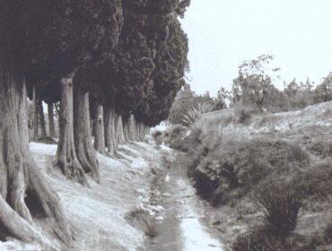 Sistema de riegos de la Huerta de Alicante
